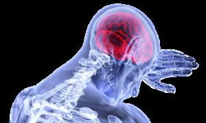 חוקרים מגלים מעגלים במוח הקשורים לאימפולסיביות בנוגע למזון